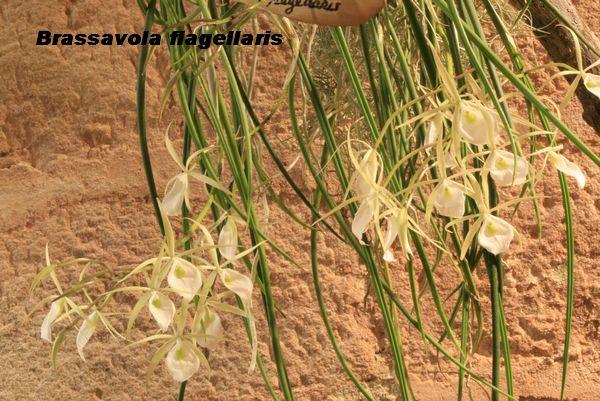 Expo Orchidées de l'abbaye de Fontfroide (11) - Page 2 Fontfr14