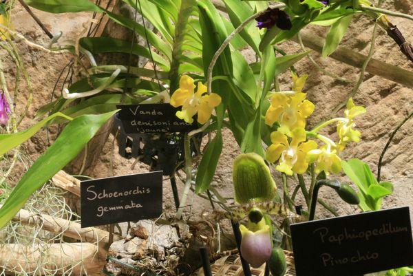 Expo Orchidées de l'abbaye de Fontfroide (11) - Page 2 Fontfr15