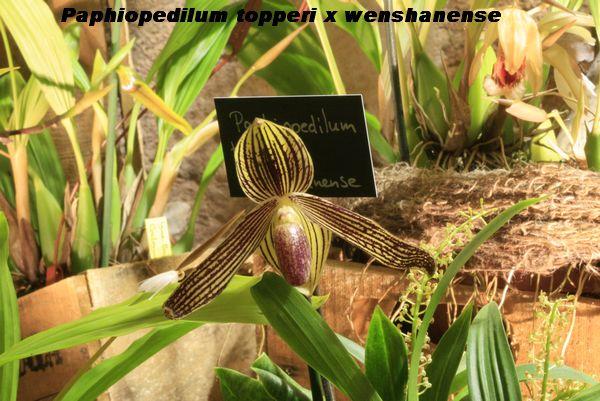 Expo Orchidées de l'abbaye de Fontfroide (11) - Page 2 Fontfr17