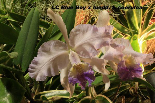 Expo Orchidées de l'abbaye de Fontfroide (11) - Page 2 Fontfr20