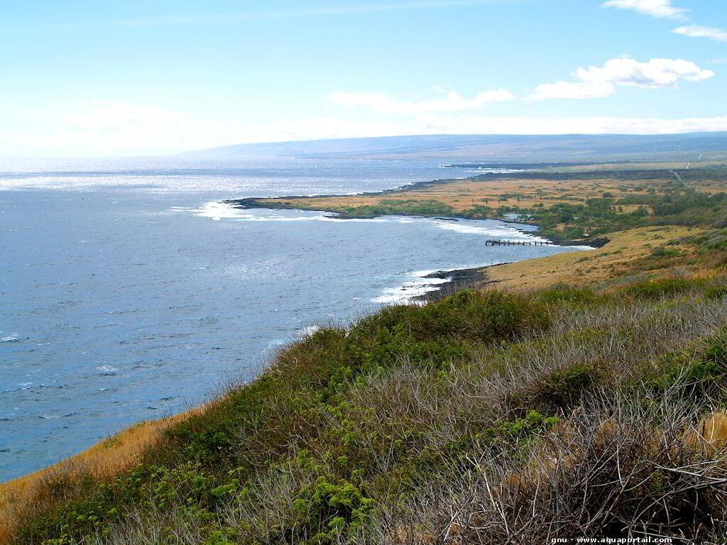 Angraecum litorale  Littor10