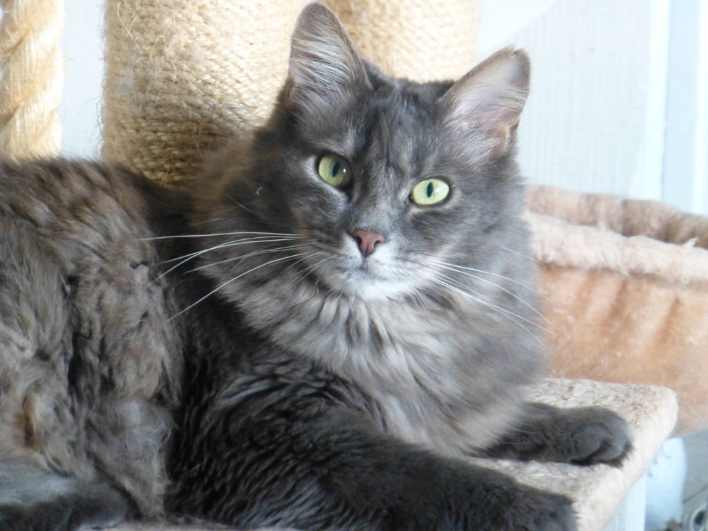 Lucky, mâle type européen gris né 16 mars 2015 - Page 4 P1060910