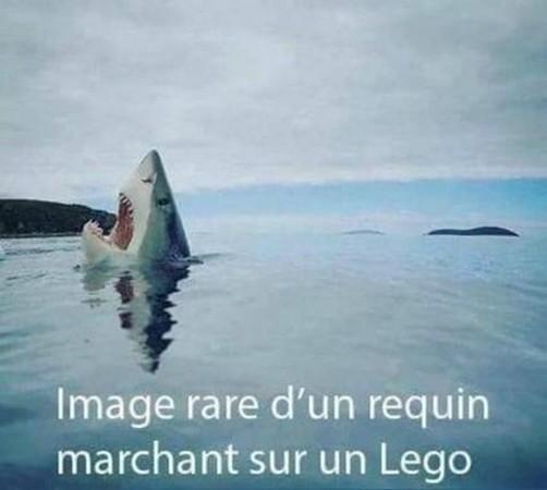 LE GRAND FOURRE-TOUT - Page 32 Requin10