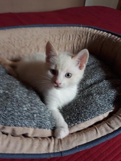 Jinan Himeji (Yasmine adoptée) Cat710