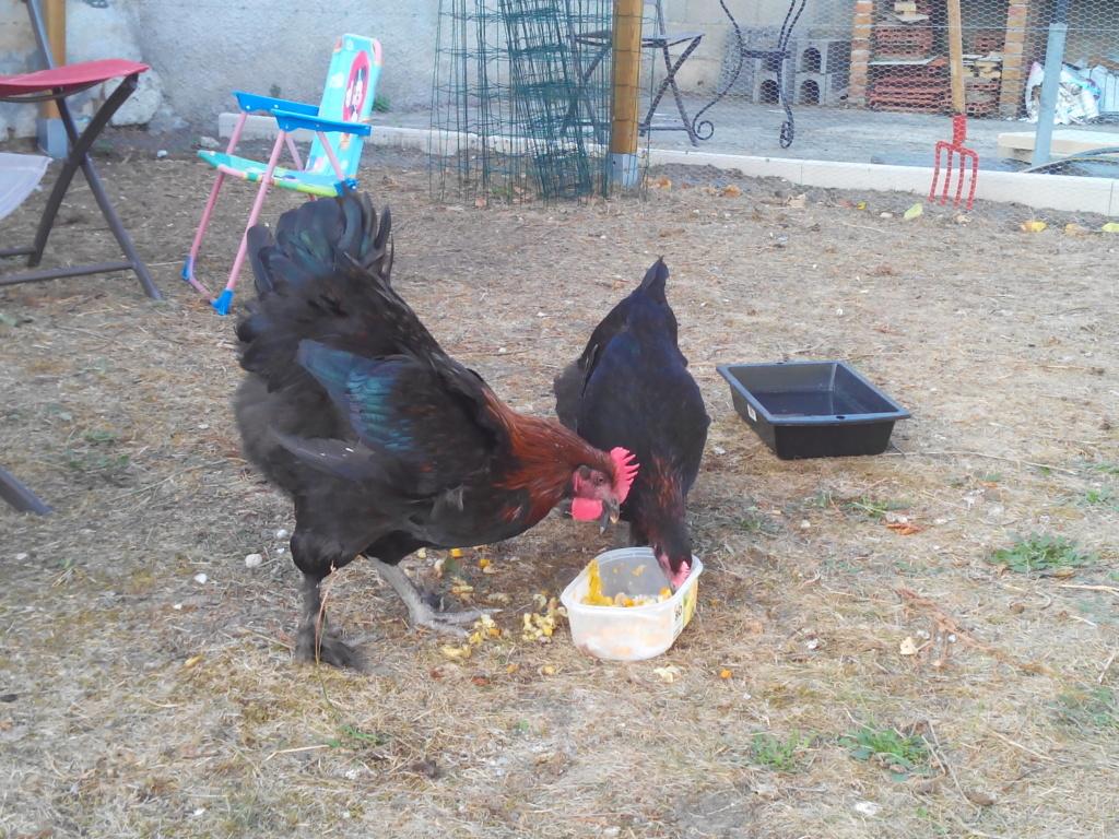 Poule ou coq Img_2010