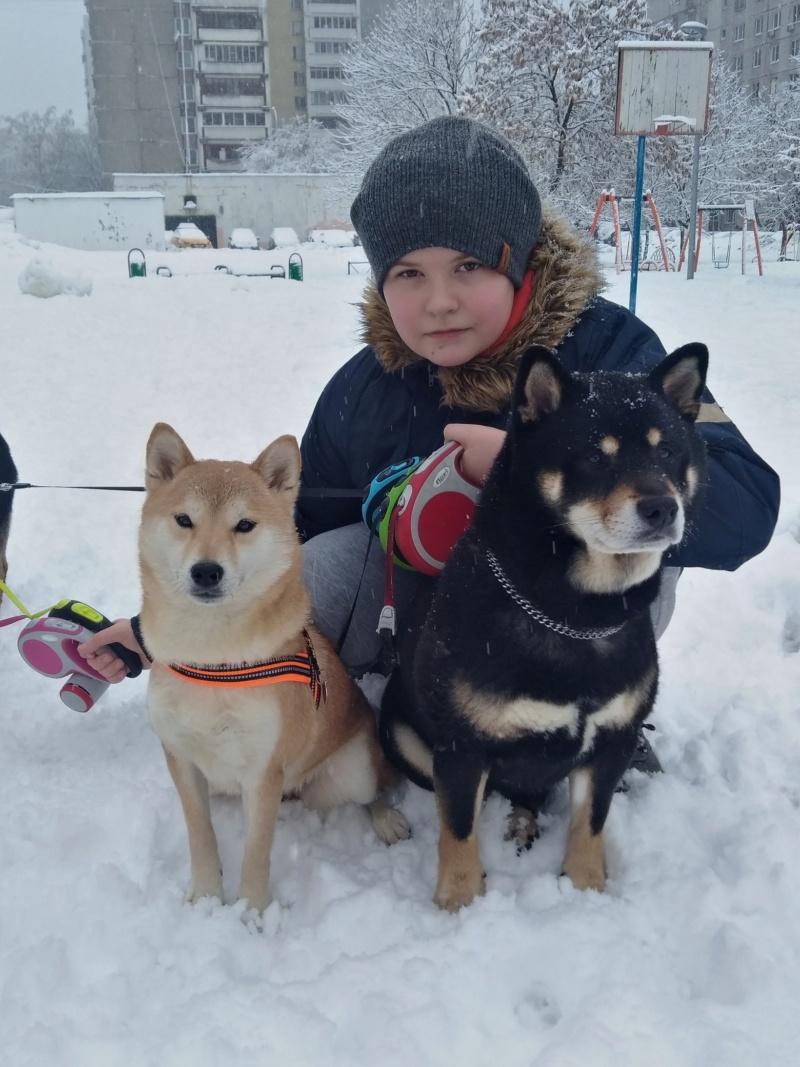 Рыжие щенки от пары RUNNER STAR RYUICHIRO & JUTUSH JASAMAN MIKO S VOSTOCHNOGO VETRA. Дата рождения 14.10.2019. Img_2052