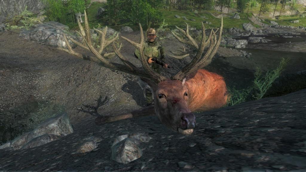 Dos ciervos rojos en 10 minutos 265_5210