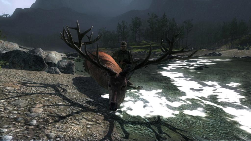Dos ciervos rojos en 10 minutos 270_3510