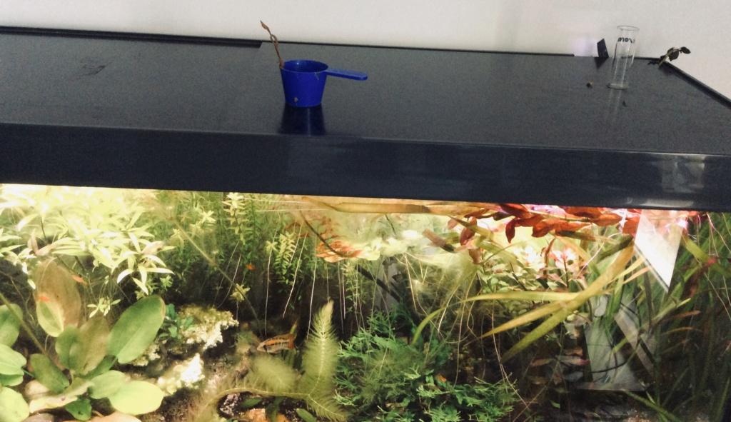 [A VENDRE] Aquarium EHEIM 240 L + meuble entièrement équipé  B7af5510