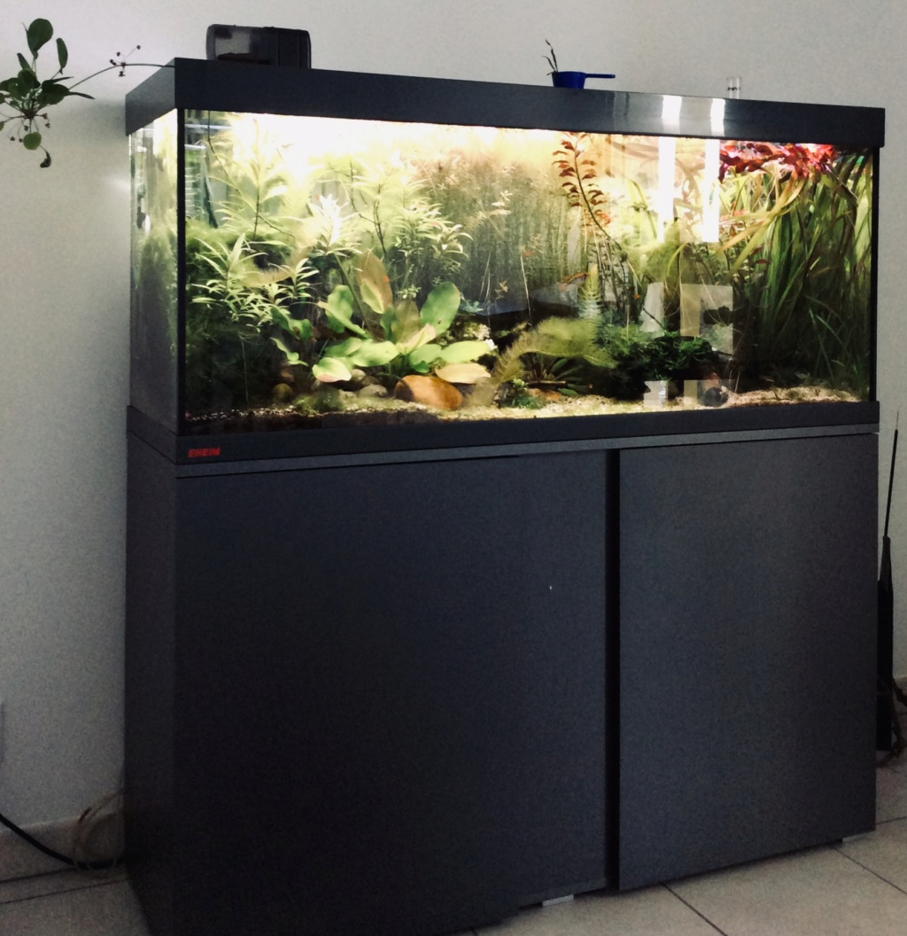 [A VENDRE] Aquarium EHEIM 240 L + meuble entièrement équipé  Ba965f10