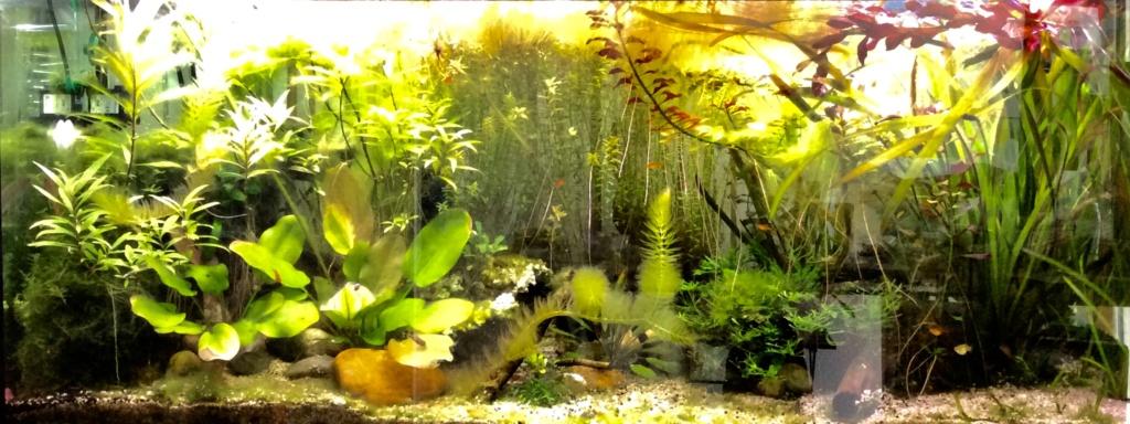 [A VENDRE] Aquarium EHEIM 240 L + meuble entièrement équipé  F4efac10