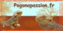 Partenariat  - Page 2 Pogona11