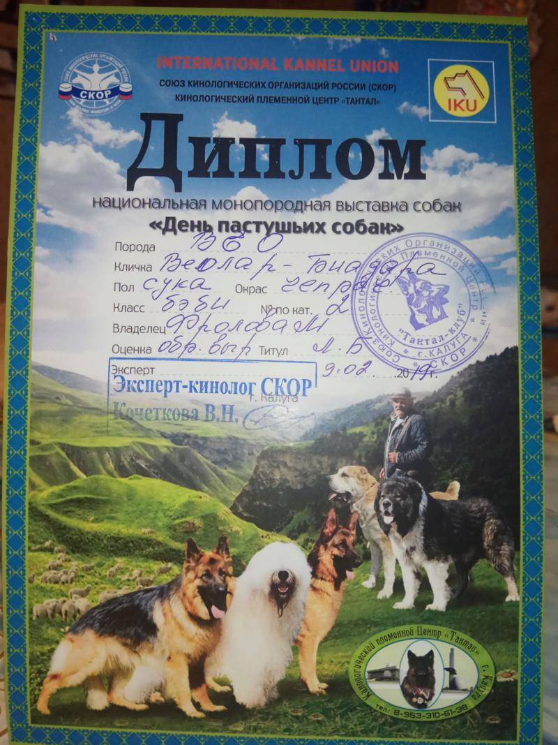 ВОСТОЧНО-ЕВРОПЕЙСКАЯ ОВЧАРКА ВЕОЛАР БИАДАРА Img_2076