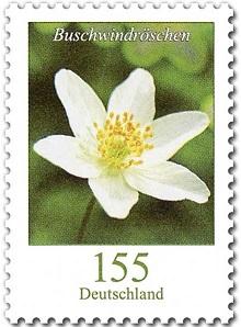 Suche Tausch Gartenblumen aus 2016 Efim1610