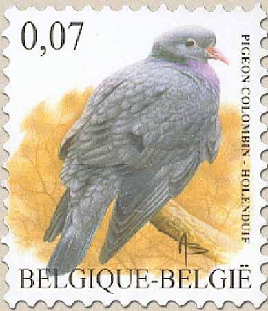 Belgien : Vogel vom BUZIN Stock-10