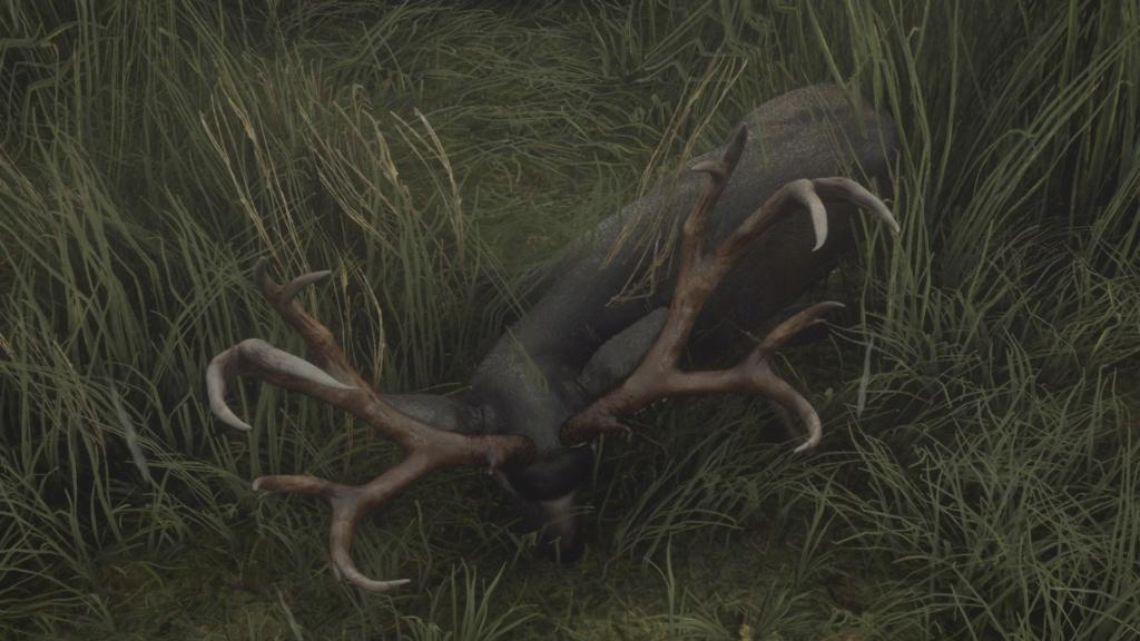 Debate: ciervo mulo, antes y ahora Mulo310