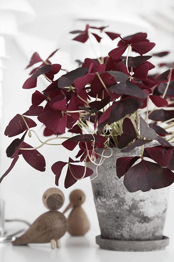 13 piante ricadenti da interno Piante12