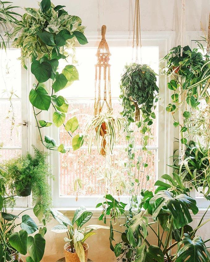 13 piante ricadenti da interno Piante13