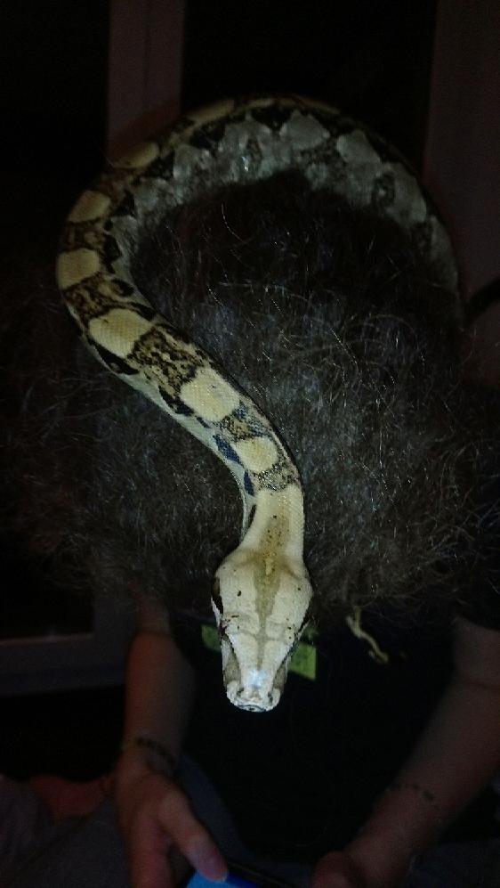 Blessure de serpent? Mms_im10