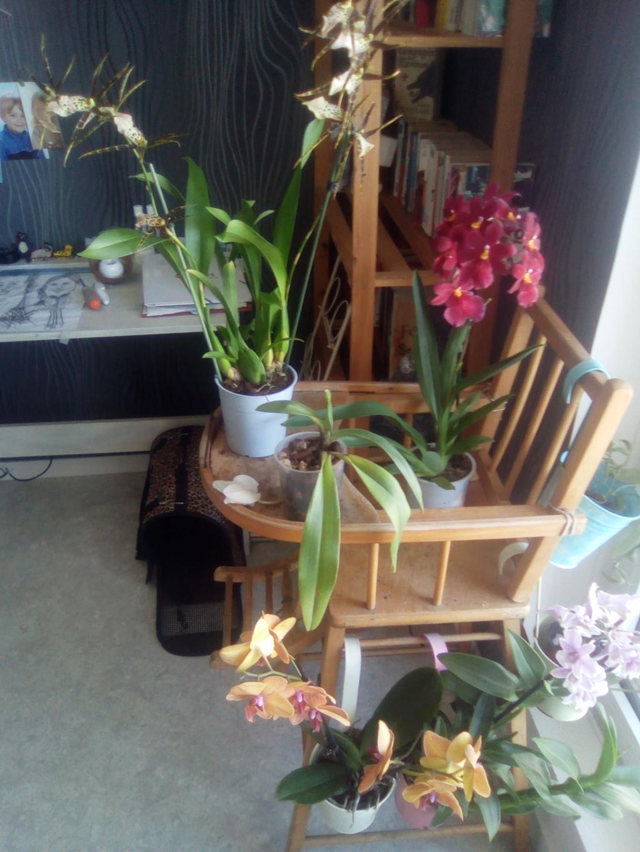 Mes orchidées et lieu de culture Img_2016