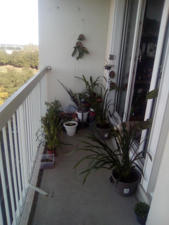 Mes orchidées et lieu de culture Img_2017