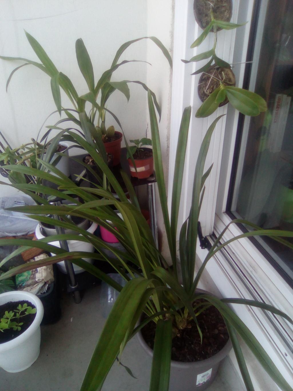 Mes orchidées et lieu de culture Img_2018