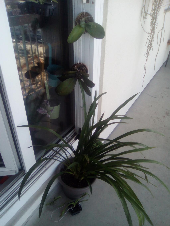 Mes orchidées et lieu de culture Img_2022