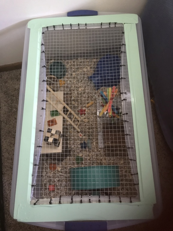Female mouse cage size 4deed610