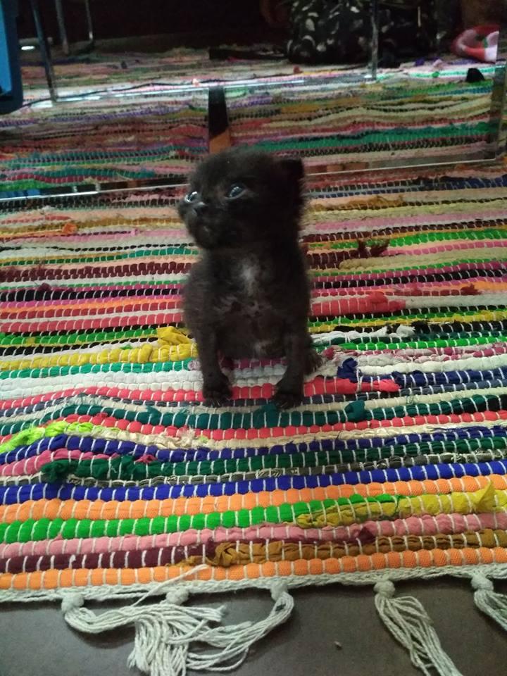Διατροφή για γατάκι 4 εβδομάδων 44767710