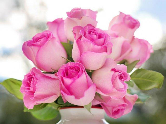 ::Desfile de Rosas AMDA::Hoy se presenta la Rosa Rosa AMDA  Rosas_10