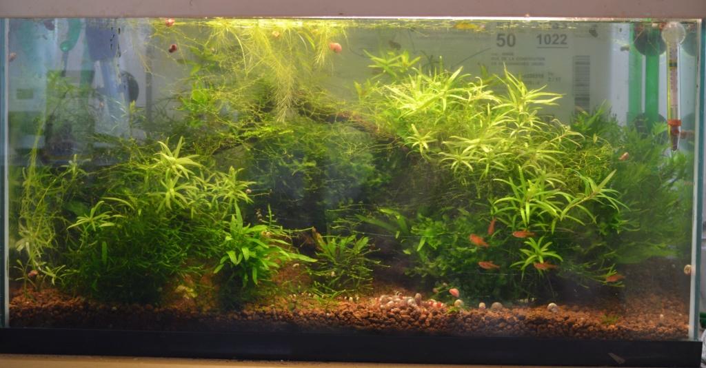 Sol, racines et plantes pour biotope amazonien - Page 2 Dsc_0015