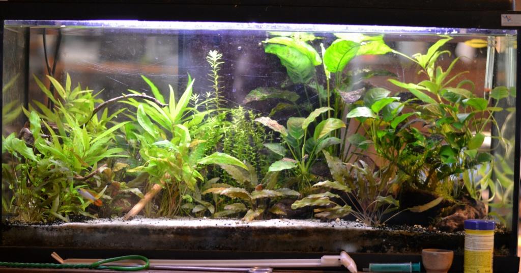 Sol, racines et plantes pour biotope amazonien - Page 2 Dsc_1213