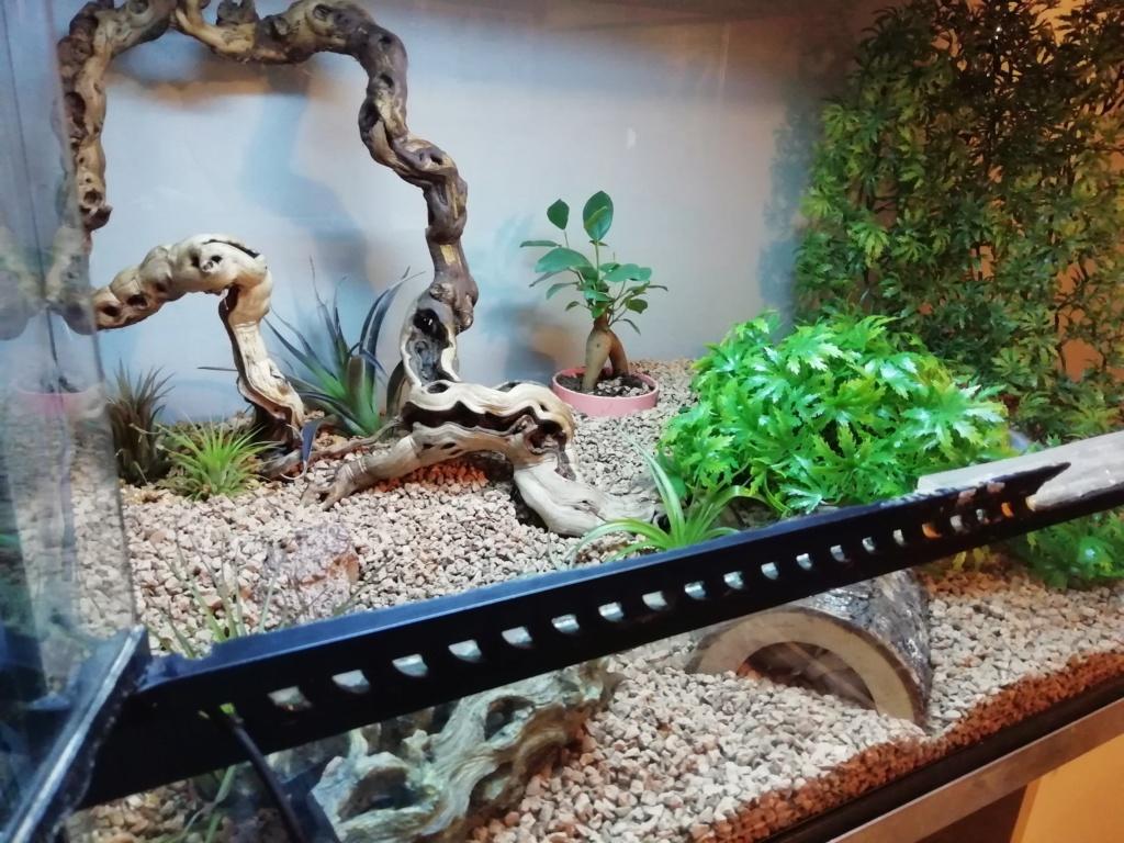 Serpent avec du substrat dans la bouche comment faire ?  Img_2024