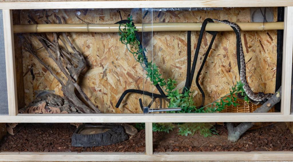 Choix Pythonidae arboricole  64e23510