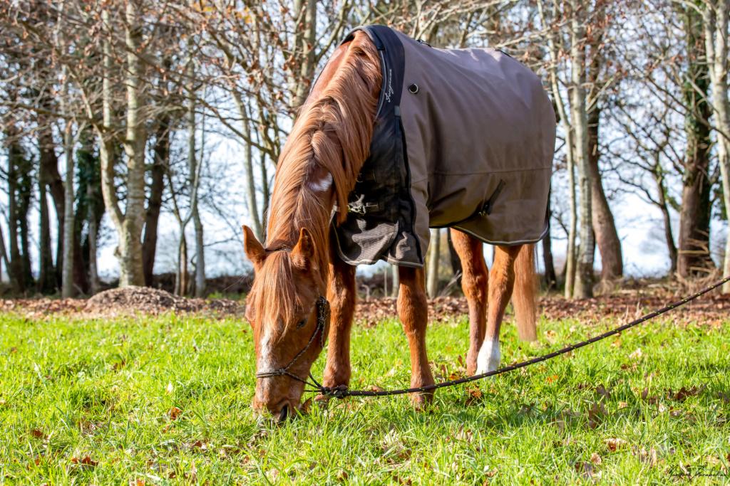 BELLOU - cheval alezan - 30 ans (FA longue durée) 349a9811