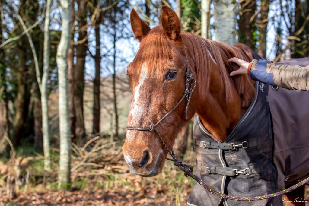 BELLOU - cheval alezan - 30 ans (FA longue durée) 349a9812