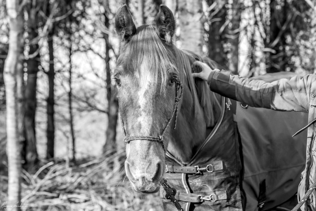 BELLOU - cheval alezan - 30 ans (FA longue durée) 349a9815