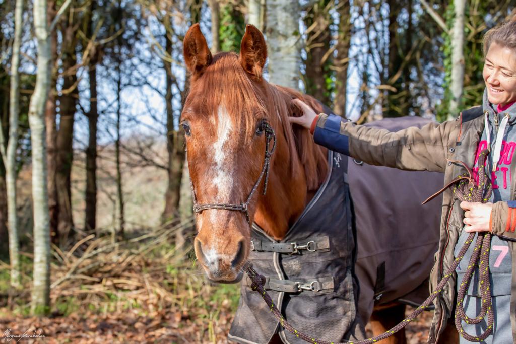 BELLOU - cheval alezan - 30 ans (FA longue durée) 349a9816