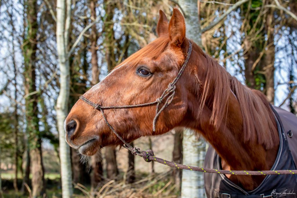 BELLOU - cheval alezan - 30 ans (FA longue durée) 349a9820