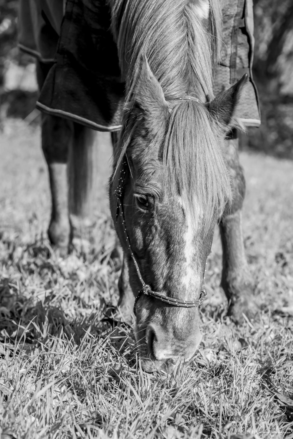 BELLOU - cheval alezan - 30 ans (FA longue durée) 349a9823