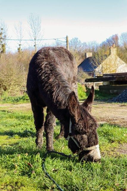 HASHTAG - âne mâle noir - 2 ans - Page 3 Hashta11