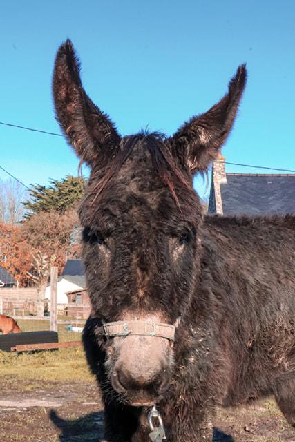 HASHTAG - âne mâle noir - 2 ans - Page 3 Hastag12