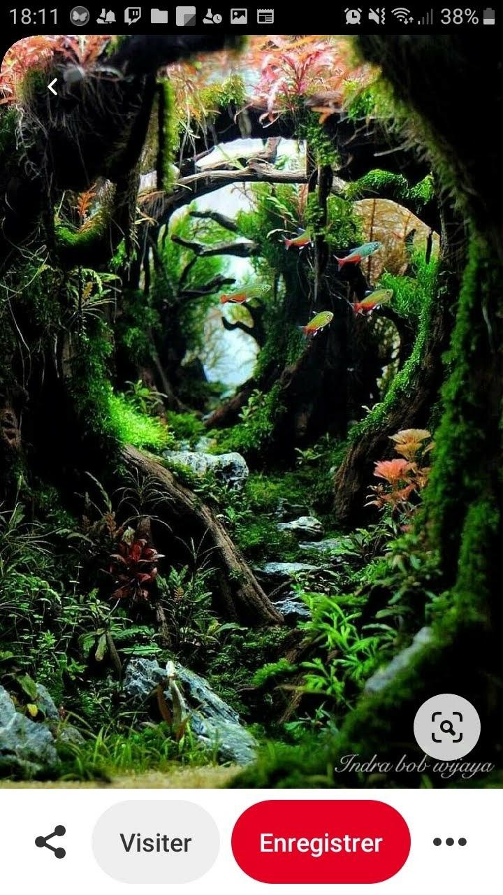 Création d'un aquarium 50x50x50 Screen10