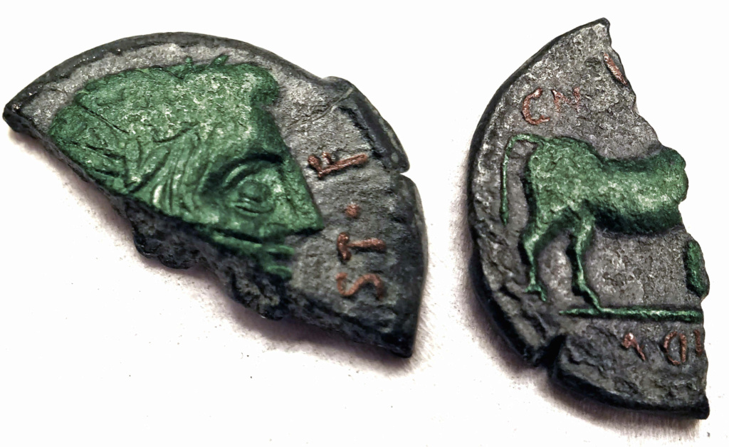 Semis partido de Castulo (VOC.ST.F) Rgb210