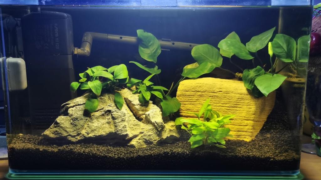 De retour dans l'aquariophilie Img_2010