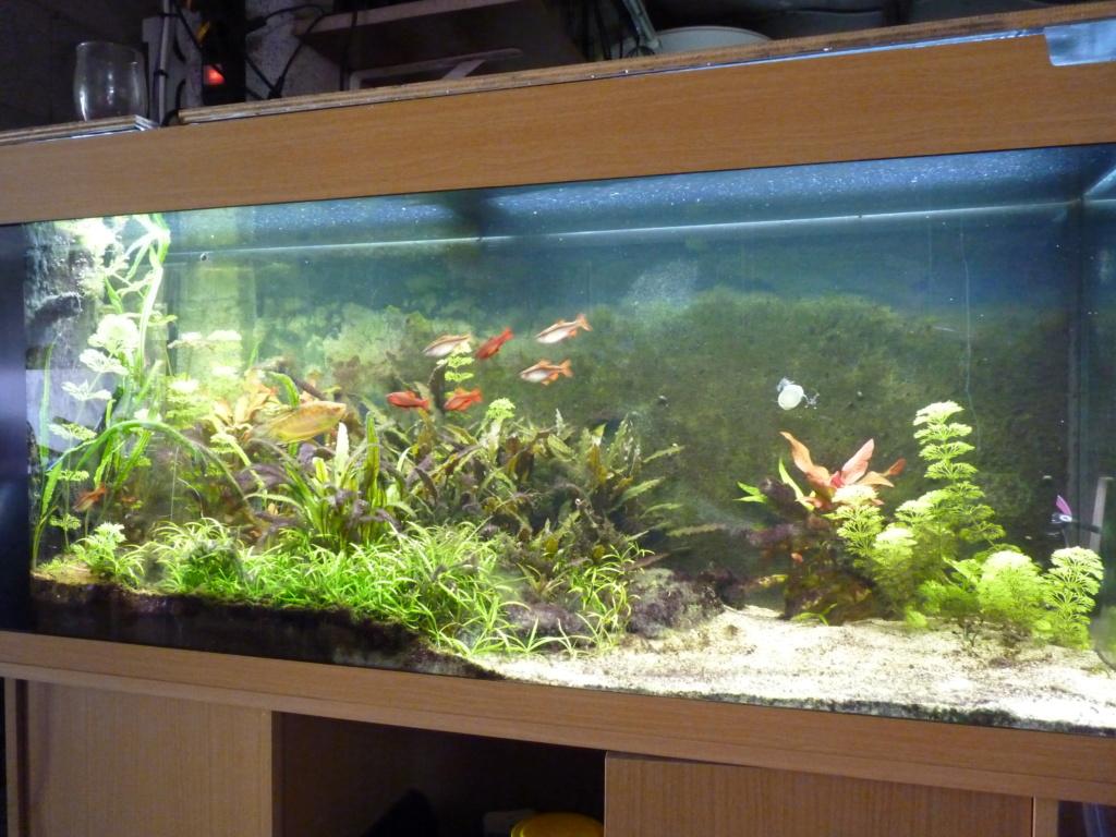 Ma petit histoire Aquariophile de 2009 à aujourd'hui  P1100210