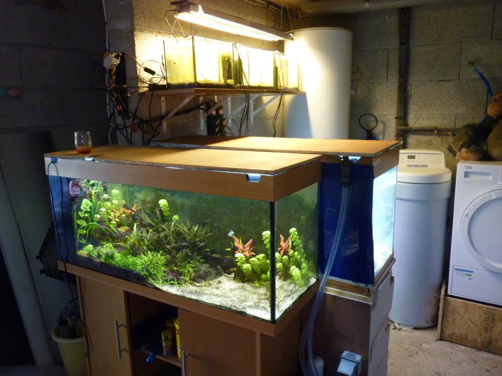 Ma petit histoire Aquariophile de 2009 à aujourd'hui  P1100211
