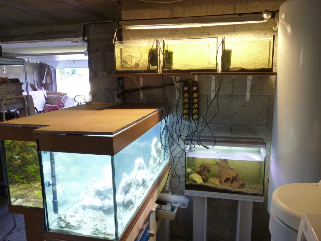 Ma petit histoire Aquariophile de 2009 à aujourd'hui  P1100214