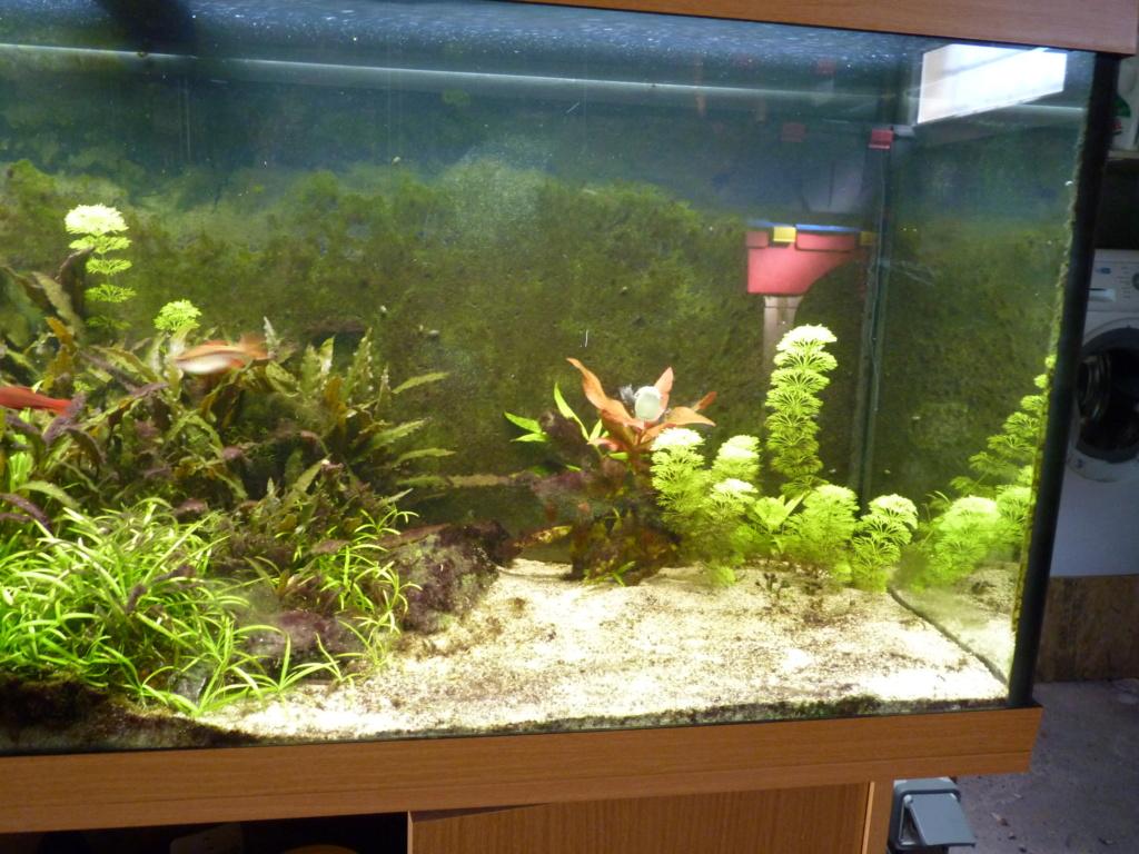 Ma petit histoire Aquariophile de 2009 à aujourd'hui  P1100216