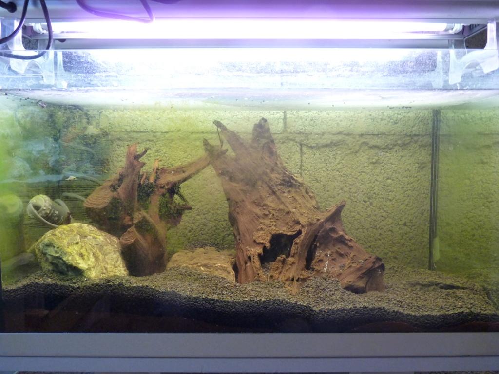 Ma petit histoire Aquariophile de 2009 à aujourd'hui  P1100219